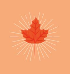 autumn leaves design vector image