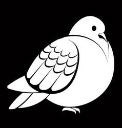 Pigeon or dove white bird vector