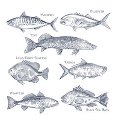 Side view on ocean and sea fish sketch fishing vector
