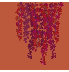 red wild grape background vector image