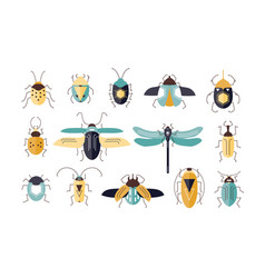 Bundle of different colorful geometric insects vector