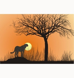 Cheetah and sunset vector image