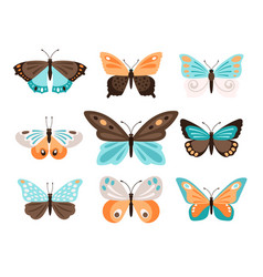 colorful butterflies with blue orange wings vector image