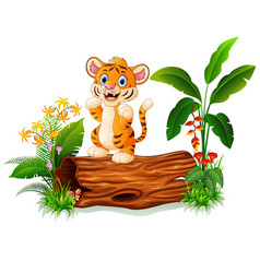 cute baby tiger posing on tree stump vector image