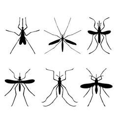 komarac vector image