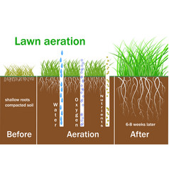 Lawn aeration for active plant growth vector