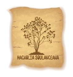 Magnolia Plant on Old Paper vector image