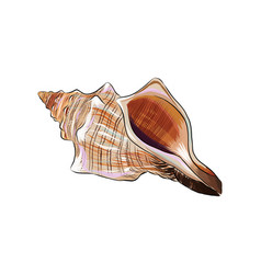 Sea shell from a splash watercolor colored vector