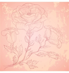 Sketch of rose branch on grungy texture vector image vector image