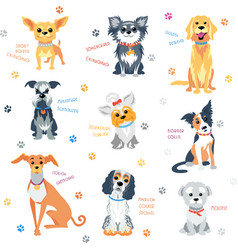 set colour dogs vector image vector image