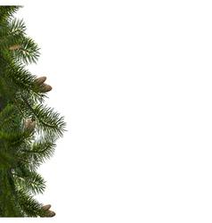 Branches fir vector