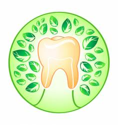 health tooth vector image