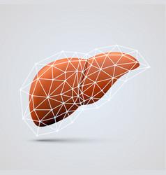 liver sign medical object vector image