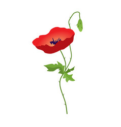 Red poppy flower isolated on white background vector