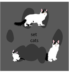three cats vector image