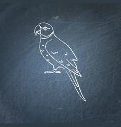 Alexandrine parrot icon sketch on chalkboard vector