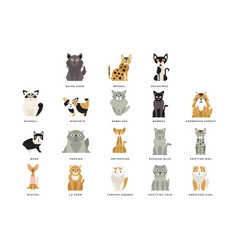 flat domestic breeds cats vector image
