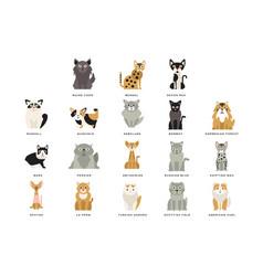 Flat domestic breeds of cats vector