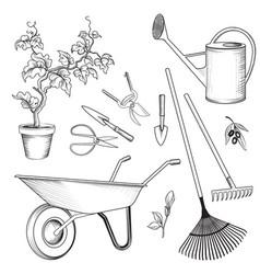 garden tools set gardening plant watering can vector image