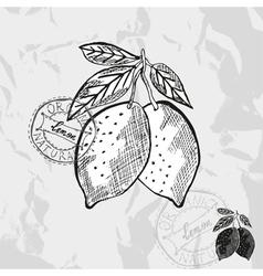 Hand drawn decorative lemon vector