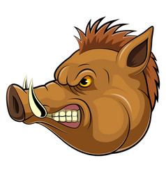 mascot head an wild boar vector image
