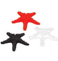 starfish on white background vector image vector image