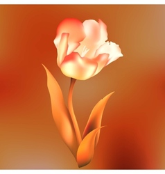 flower tulips flower spring petal tulip isolated vector image