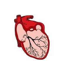 Heart med vector