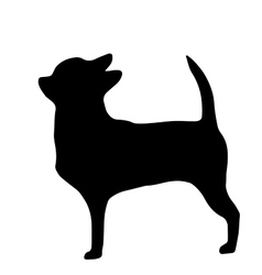 High quality silhouette of chihuahua isolated on vector