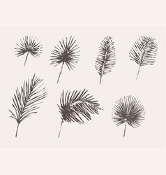 set drawn palm leaves sketch tropical vector image