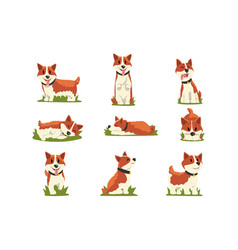 set of cartoon red-haired corgi dogs vector image