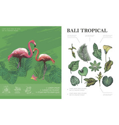 sketch tropical bali concept vector image