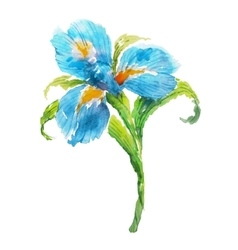 Blue watercolor iris flower vector image vector image