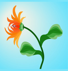 orange flower gerbera on blue sky background vector image