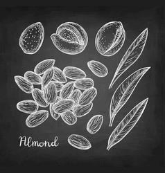 Chalk sketch of almond vector