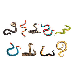 Colorful collection of various snakes vector