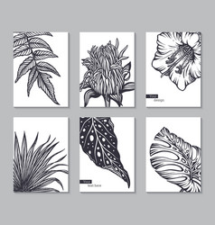 set six cards with hand drawn tropical vector image