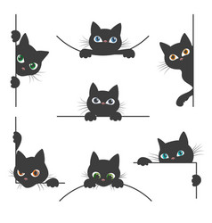 Spy cat collection vector