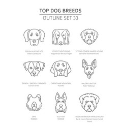 Top dog breeds hunting dogs set pet outline vector