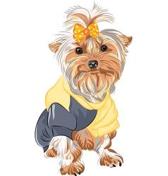 Pedigreed dog yorkshire vector