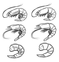 Set of shrimps icons isolated on white background vector