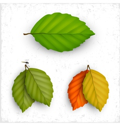 set of leaves vector image vector image