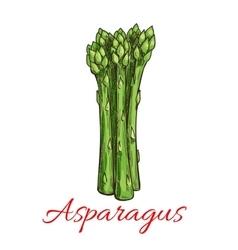 Asparagus vegetable plant icon vector