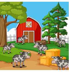 Cows in farmyard vector