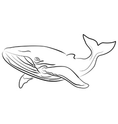 hand drawn sketchy whale vector image