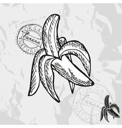 Hand drawn decorative banana vector image