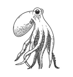 Octopus in engraving style design element vector