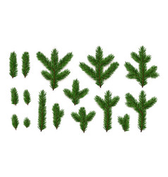 set pine fir green branches spruce branches vector image