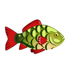 The green fish vector