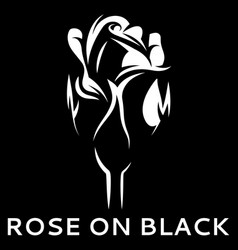 with white rose on black vector image
